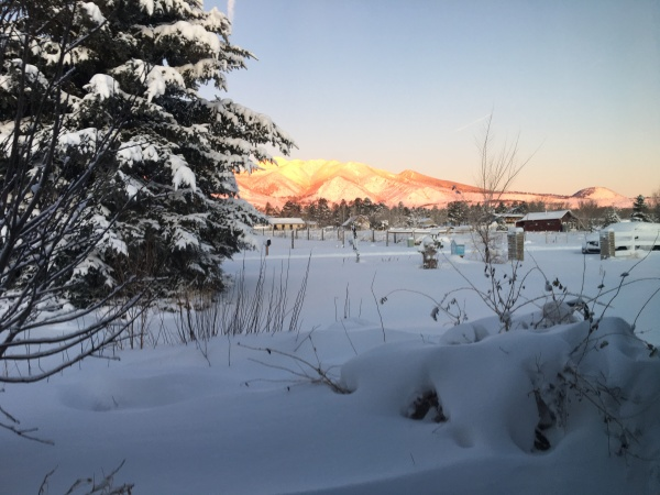 Photo of snow in foreground with blue spruce and San Francisco Peaks in background