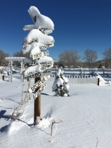 Photo of garden sign and small tree covered in snow